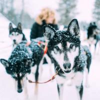 EM 2021: Internationales Schlitten-Hunderennen in Klaistow