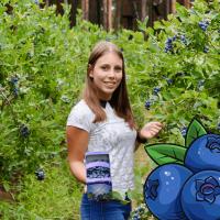 Heidelbeer-Selbstpflücke
