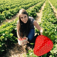 Erdbeer-Selbstpflücke